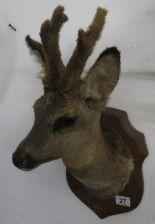Lot 27 - Large deer's head