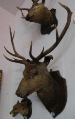 Lot 22 - Large early glass eyed stag's head