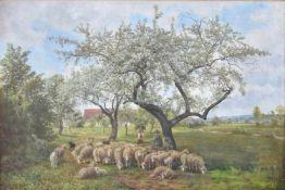 """JULIUS KORNBECK:"""" Schafe unter blühenden Bäumen"""", Öl auf Leinwand, gerahmt, unsigniert, mit"""