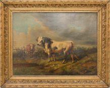 UNBEKANNTER KÜNSTLER, JUNGER BULLE, Öl auf Leinwand, gerahmt, unsigniert.36 x 45 cm m. R.Kratzer auf