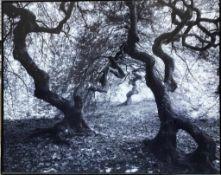 BRUNO VAUTRELLE, Fotographie Faux n51, Frankreich 2001.Gerahmt und in neuwertigem Zustand.160 x