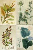 Dekorative GraphikPflanzendarstellungen. 11 kol. Radierungen. Bis 40 x 21 cm.