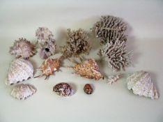 10 teiliges Konvolut diverser Muscheln und Korallen, gefunden um 1901 am Chinasee und auf den