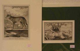 """""""Hunde"""". Drei Blatt. Dabei: Boitard: """"Jagdhunde"""". Kupferstich um 1750. """"Wachhund"""", Lithovon C."""