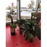 Lot de (5) plantes decoratives, viviantes et artificielles