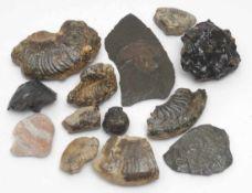 Konvolut Mineralien