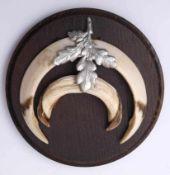 JagdtrophäeEberzähne, auf Holzplatte montiert. Durchm.14cm.