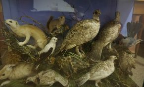 A Large Taxidermy Rodent and Bird Display, To include a Partridge, Hare, etc, 10 in total, raised on