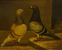 """Andrew Beer (1862-1954) """"Portrait of Two Pigeons"""" Oil on Canvas, signed W.A. Beer and dated 1891"""