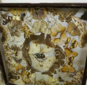 A Butterfly Display, Approximately 80 in total, in a glazed display case, also with another