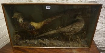 A Taxidermy Group of Two Game Birds, Enclosed in a display case, 41cm high, 77cm wide