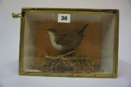 A Taxidermy Bird, In a glazed display case, 17.5cm high, 26cm wide