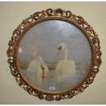 English school, a pair of swans, oil on board, 49 cm diameter, in a Florentine gilt frame
