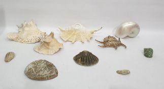 Quantity of shellsto include conch shells, scallop shells, a large nautilus shell
