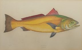 Set of five colour prints studies of fish to include Common Sea Bream, Opah etc. (5)