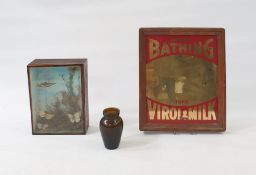 Taxidermy display of butterflies mounted on foliage, within a glazed wooden case, 16.5 x 22cm,
