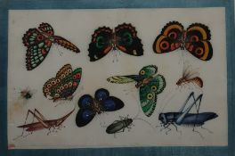 Pair 19th century Chinese paintings on rice-paper, studies of butterflies and other insects, 31cm