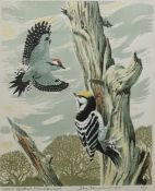 "John Tennent Limited edition lithograph 9/90 ""Lesser spotted woodpeckers"", signed and dated 1978"