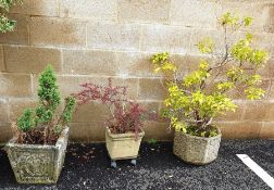 Two square composite garden planters and one planter moulded with leaves and flowers