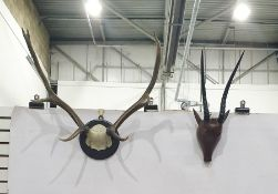 Mounted stag hornand Kudu(?) hornsset on a wooden head/mask (2)