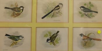 16 framed and glazed colour prints British birds