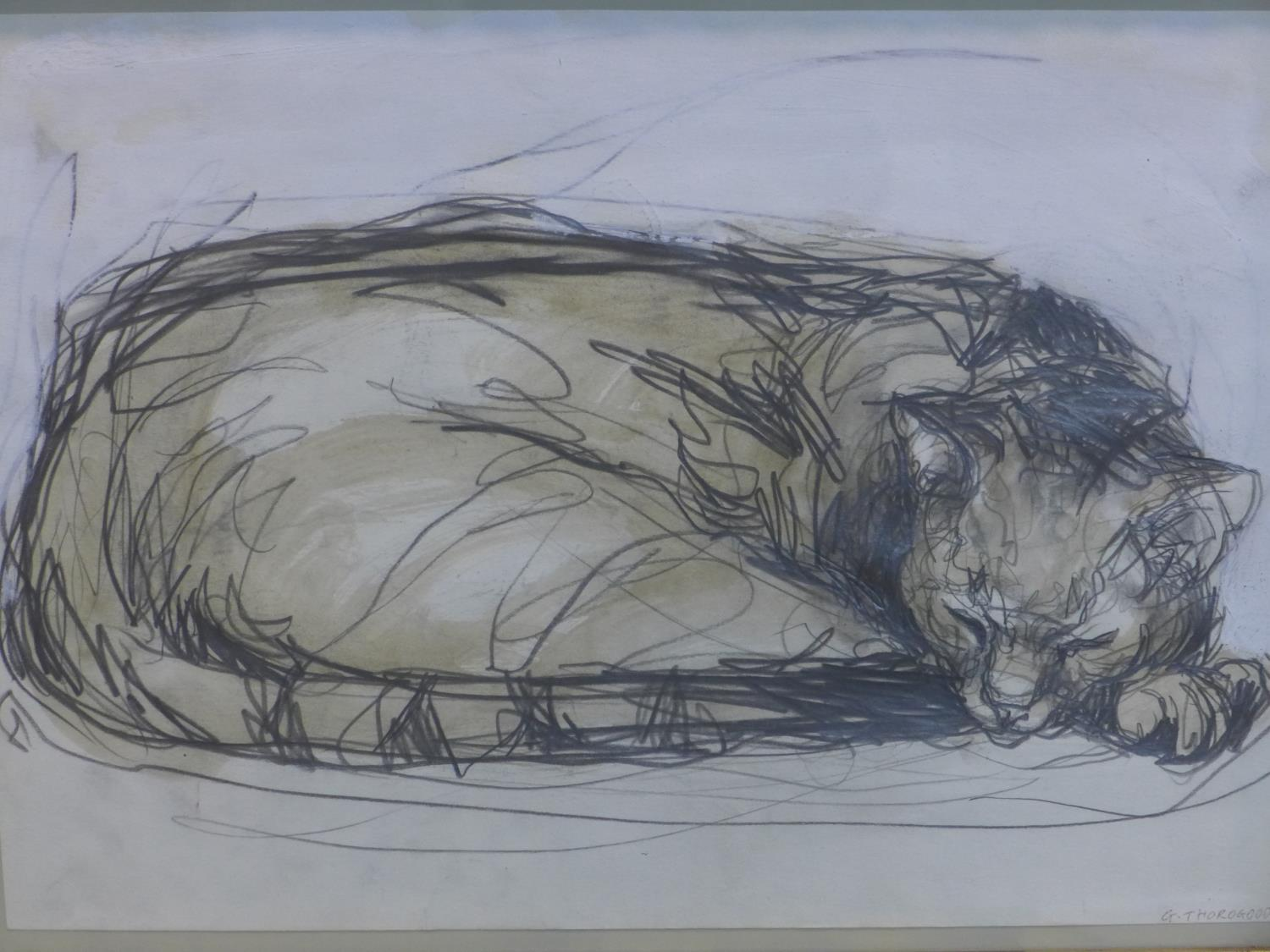 Lot 55 - Contemporary British draughtsman, sleeping cat, pencil and watercolour, signed and dated 'G.