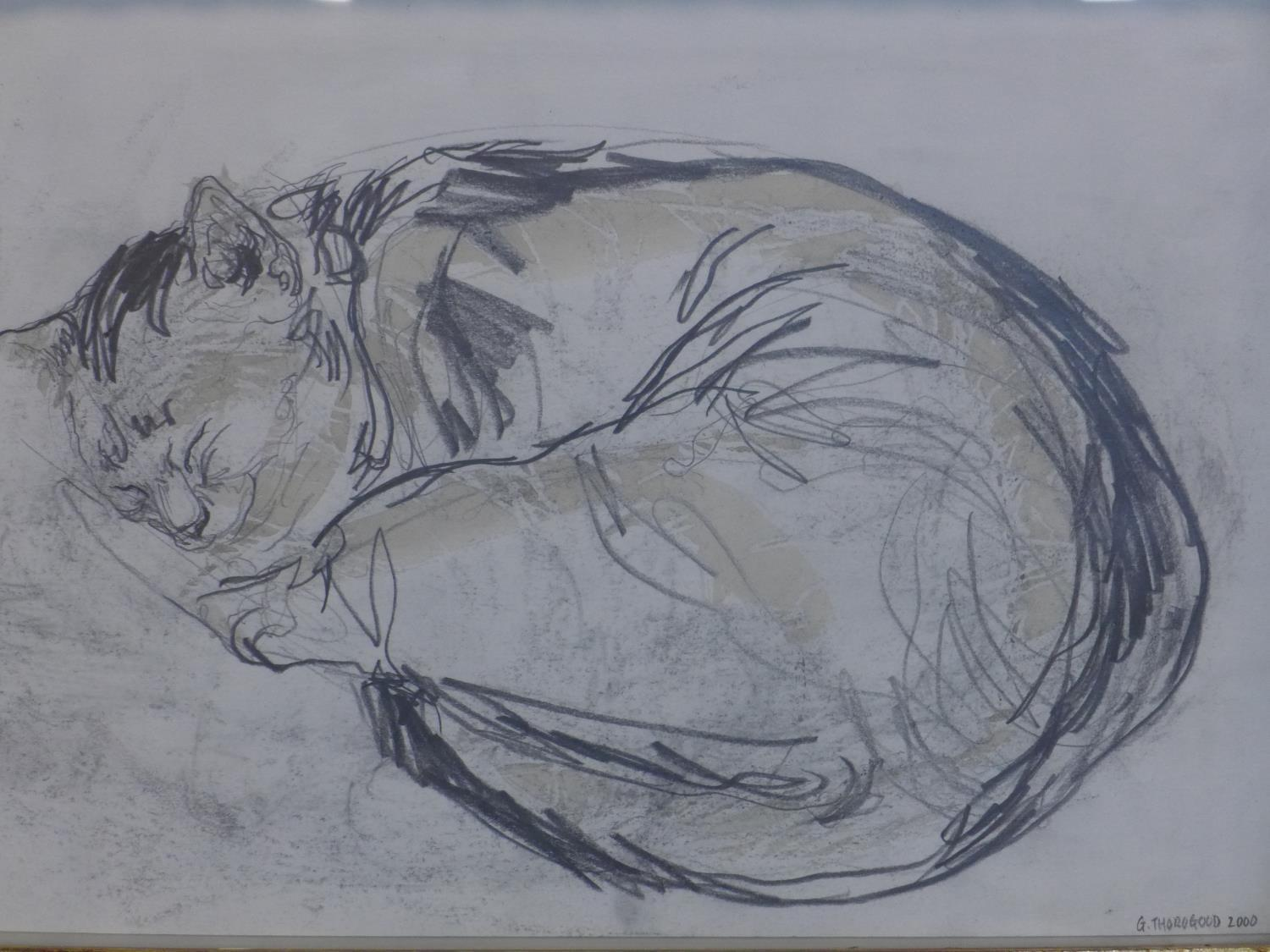 Lot 51 - Contemporary British draughtsman, sleeping cat, pencil and watercolour, signed and dated 'G.