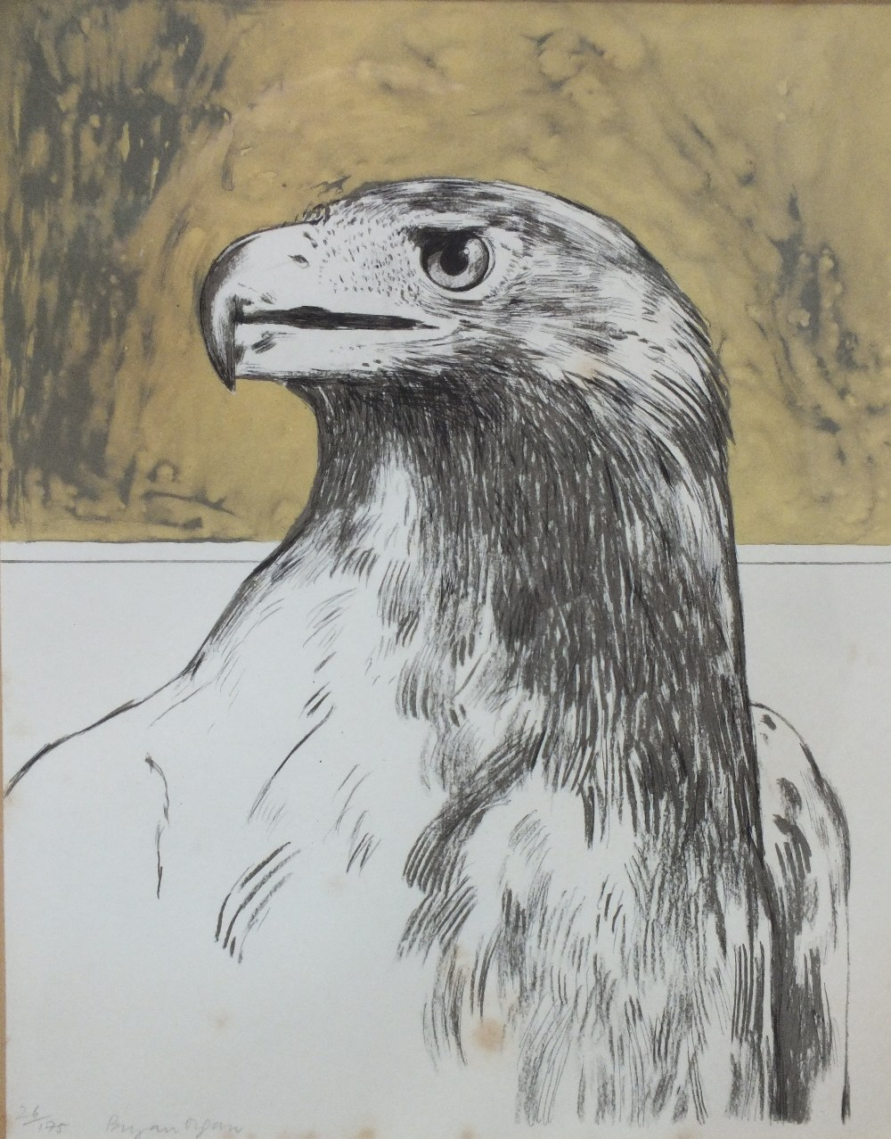 Lot 49 - BRYAN ORGAN (b.1935). Study of an eagle, signed in pencil lower left, limited edition lithograph