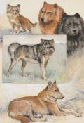 Arthur Wardle (British 1860-1940)A group of dog studies to include a black red chow chow, a chihuahu