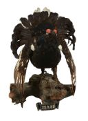 A preserved black grouse, Tetrao tetrix, dated 1959, modelled on a naturalistic wood mount with