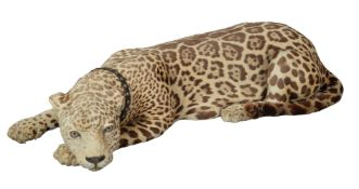 ϒ A preserved leopard, Panthera pardus, late 19th/early 20th century, modelled recumbent