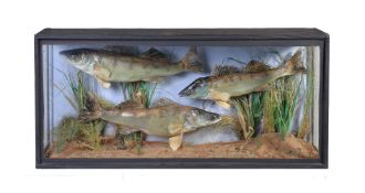 An ebonised and glazed case of three preserved fish mounted in a naturalistic setting, mid 20th