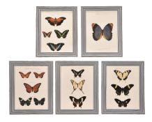 A set of twelve colour lithographs of butterflies