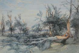 John Middleton (British 1827-1856) The Blown Wood