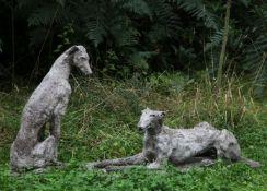 Rosie Sturgis, Greyhounds