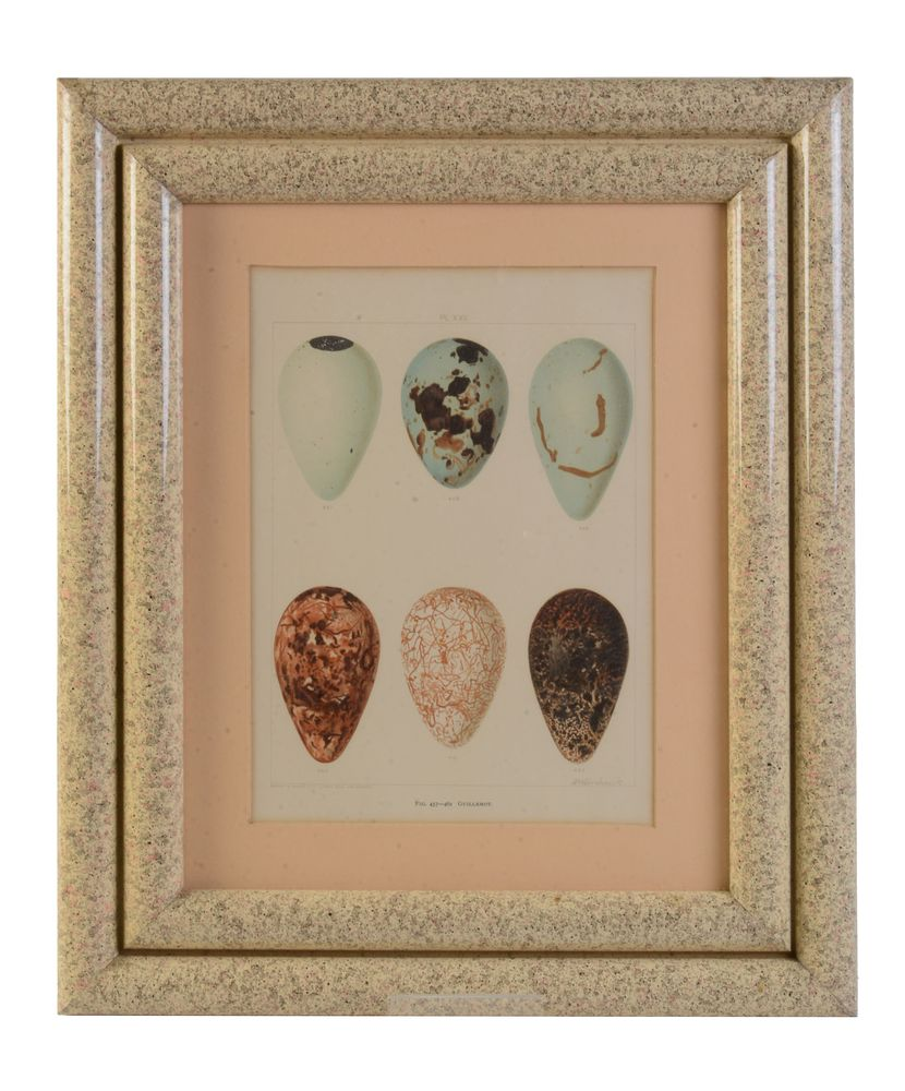 Lot 435 - A set of eight chromolithographs of birds' eggs after designs by Frederick William Frohawk (British