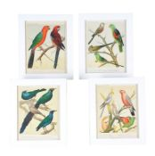 A set of twelve colour prints from Cassell's Canaries and Cage Birds