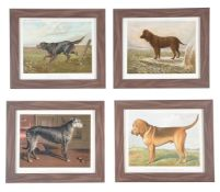A set of twelve colour prints from Cassell's Illustrated Book of the Dog