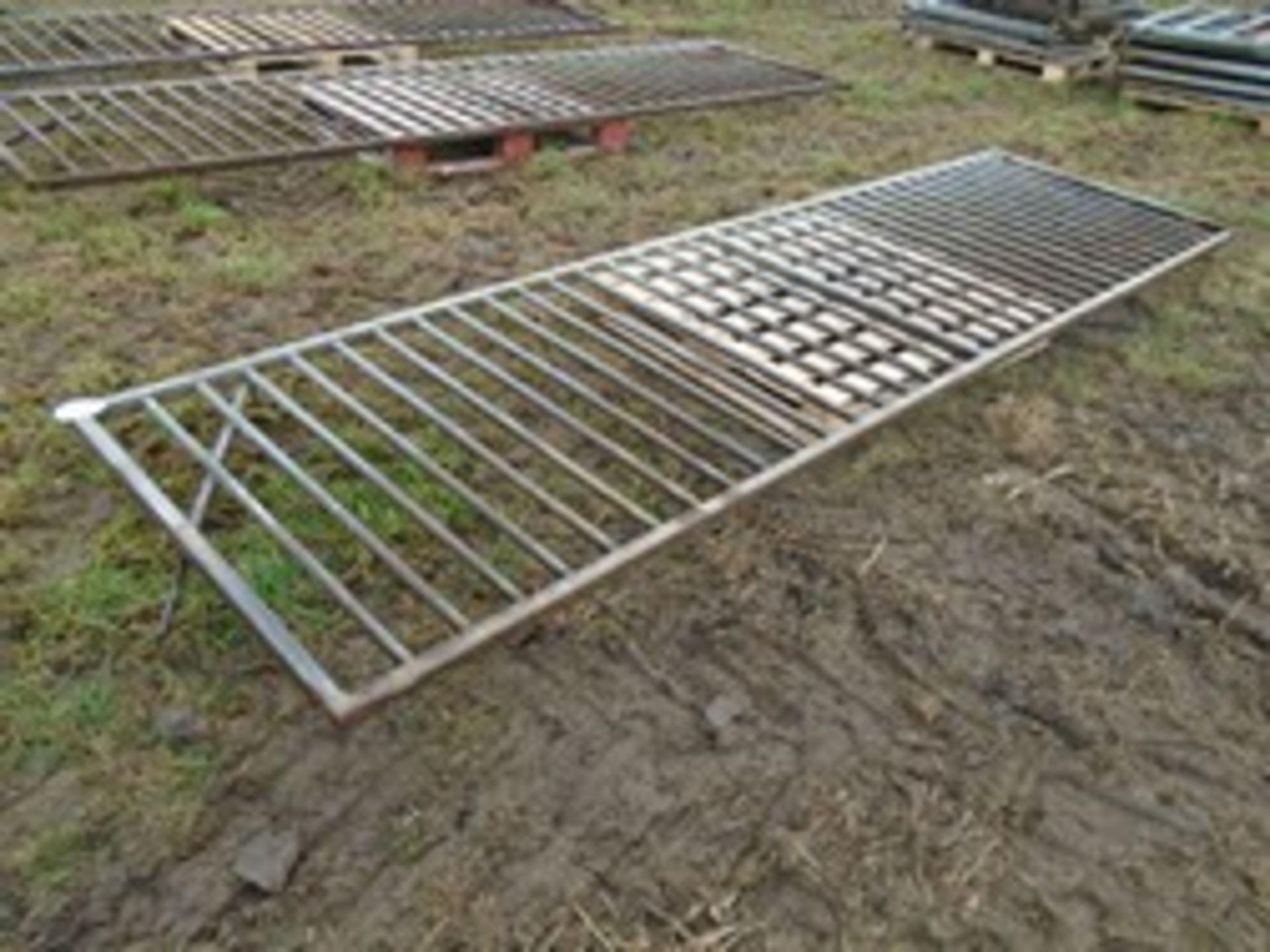 Lot 14 - 14' metal pig gate