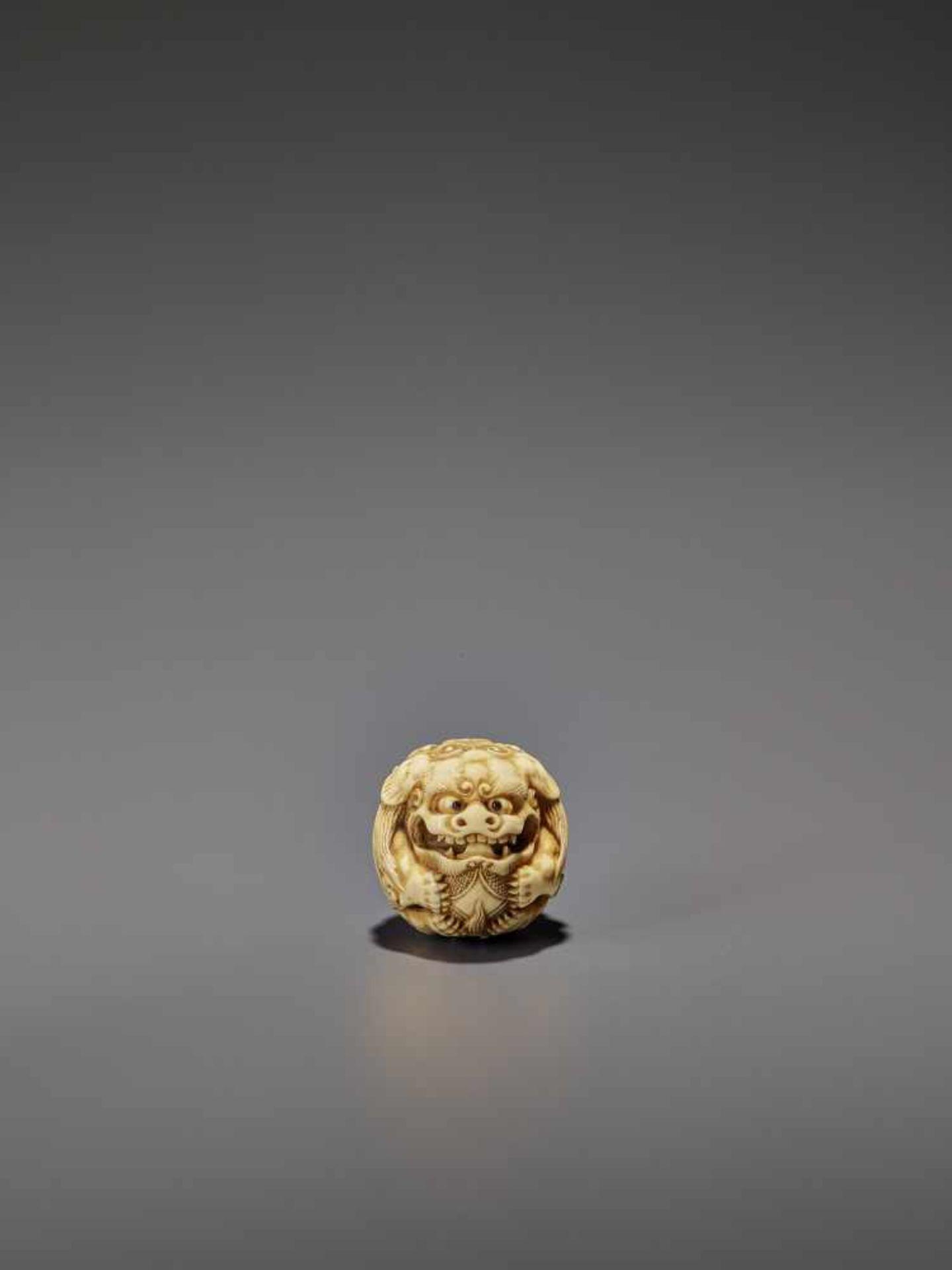 AN IVORY NETSUKE OF A SHISHI ROLLED INTO A BALL UnsignedJapan, 19th century, Edo period (1615-1868)
