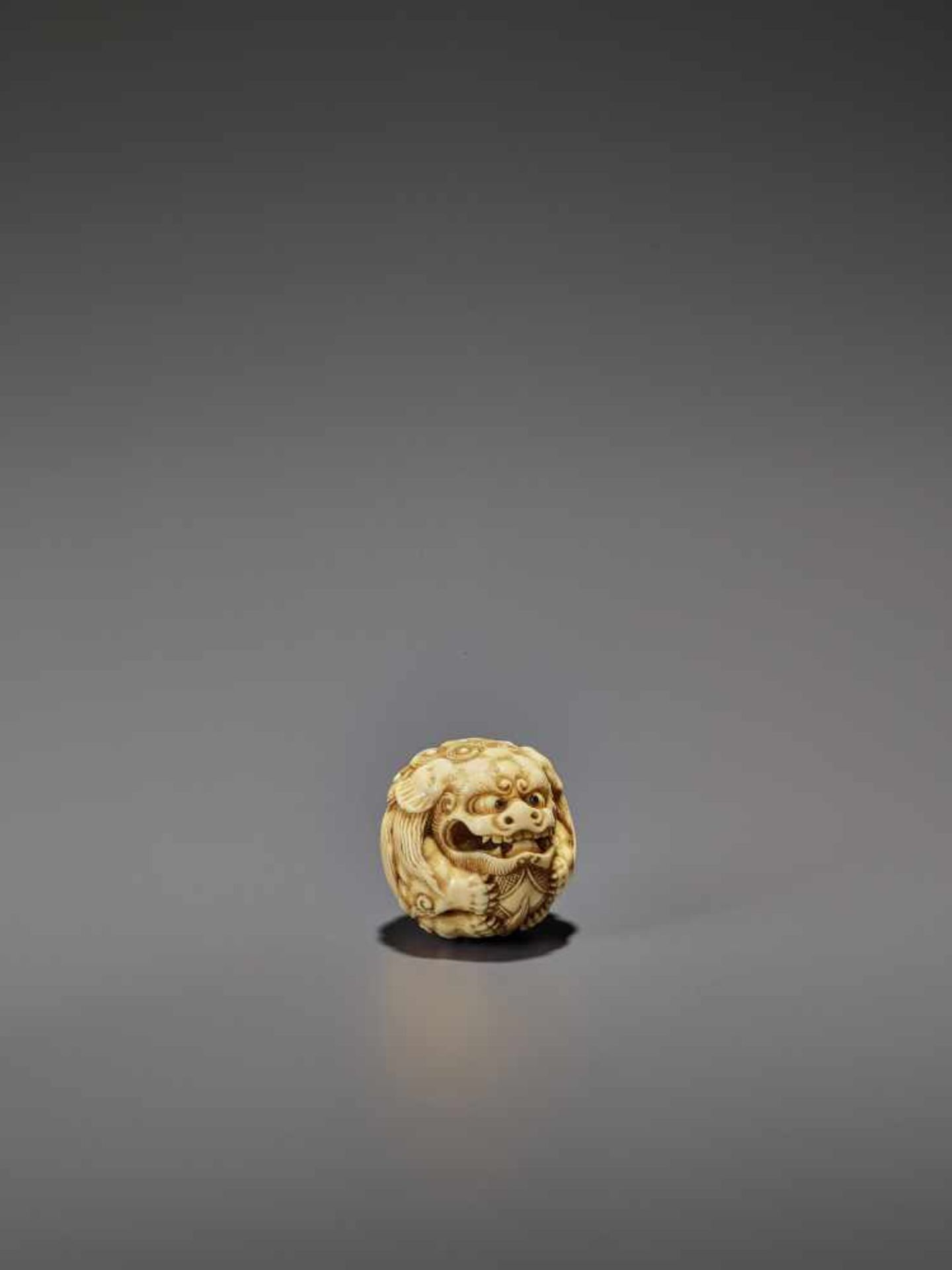 AN IVORY NETSUKE OF A SHISHI ROLLED INTO A BALL UnsignedJapan, 19th century, Edo period (1615-1868) - Image 3 of 9