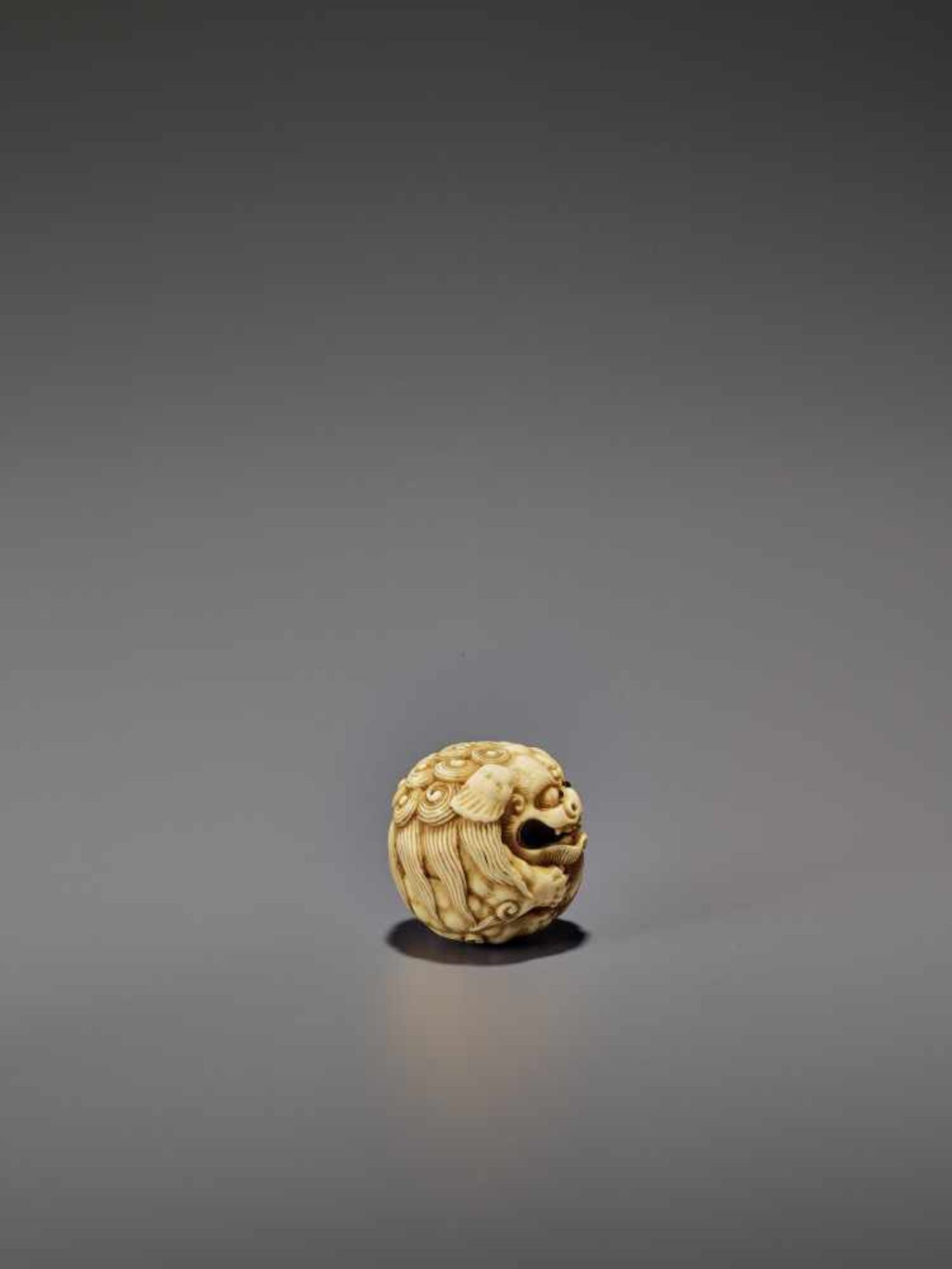 AN IVORY NETSUKE OF A SHISHI ROLLED INTO A BALL UnsignedJapan, 19th century, Edo period (1615-1868) - Image 7 of 9