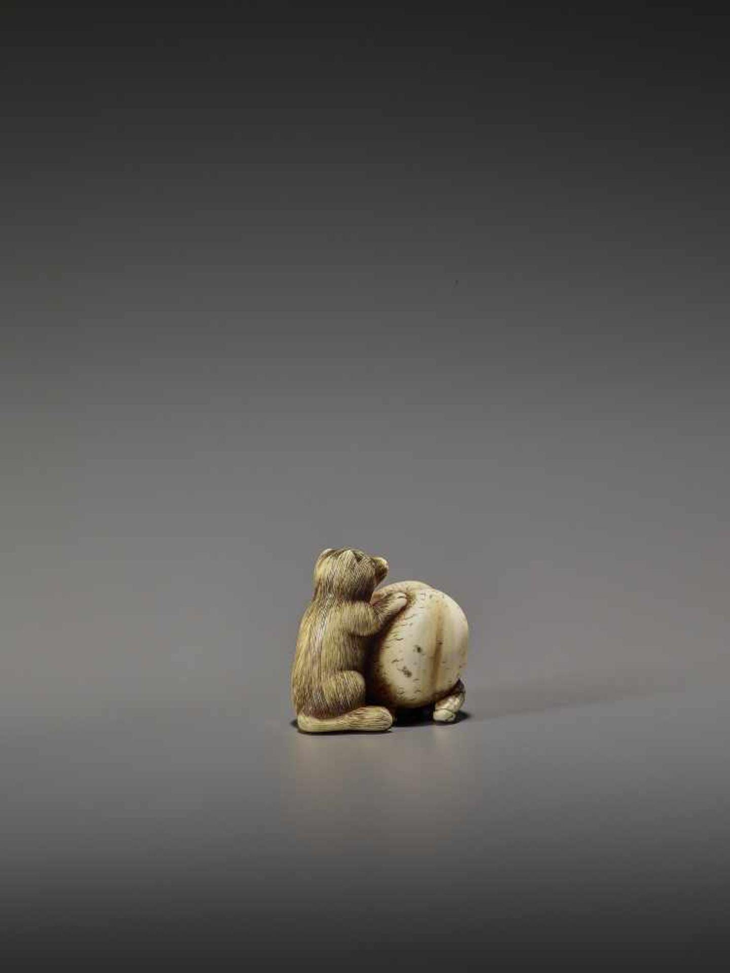 SHUNGETSU: IVORY NETSUKE OF A TANUKI SUFFOCATING A HUNTER WITH HIS SCROTUM By Shungetsu, signed - Image 6 of 11