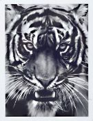 "Robert Longo, geb. 1951, ""Tiger"", Presse Foto, nicht limitiert, handsign., zwischen doppelt"