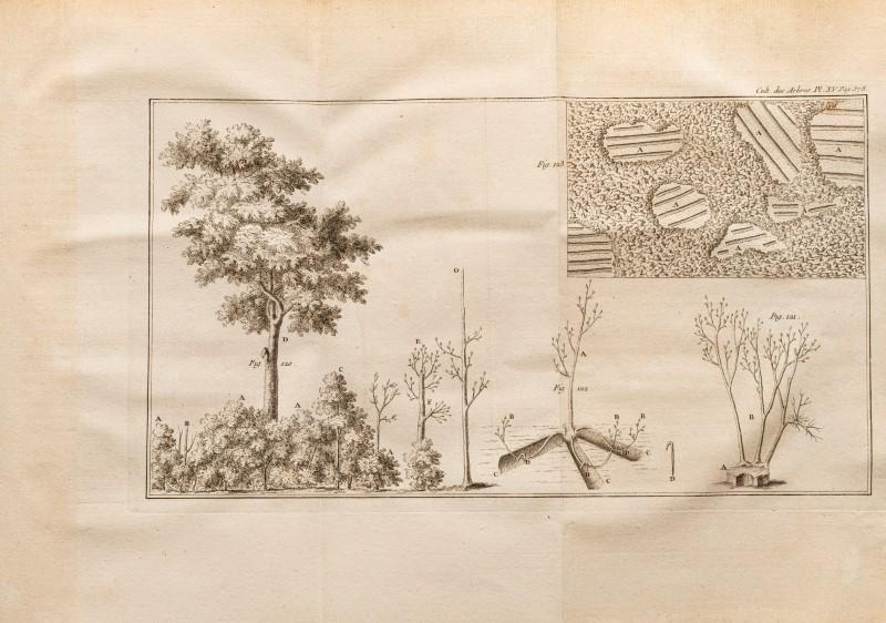 Lot 36 - DUHAMEL DU MONCEAU. Des semis et plantations des arbres et de leur culture.... 1760 1 vol. in-4° bas