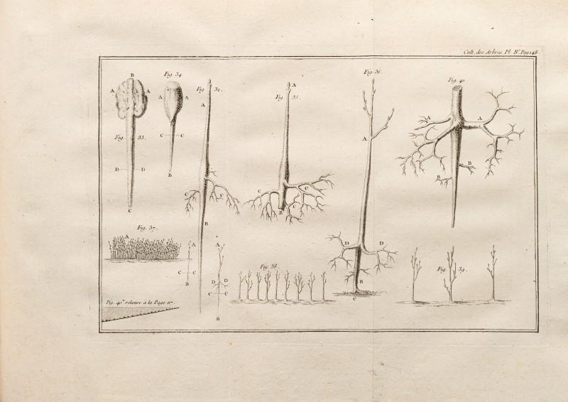 Lot 38 - DUHAMEL DU MONCEAU. Des semis et plantations des arbres. Paris. Veuve Desaint