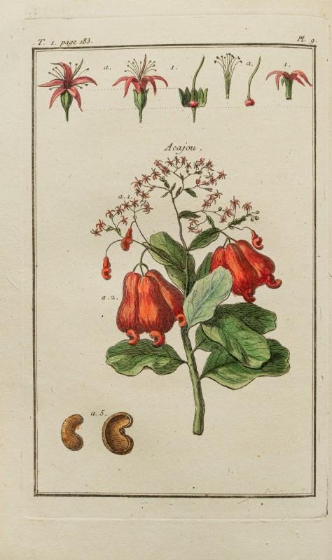 Lot 56 - LABEYRIE. GOULIN. Dictionnaire des plantes usuelles... 14 vol. in-8° pleine basane blonde marbrée