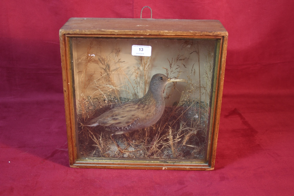 Lot 13 - A taxidermy of a Water Rail