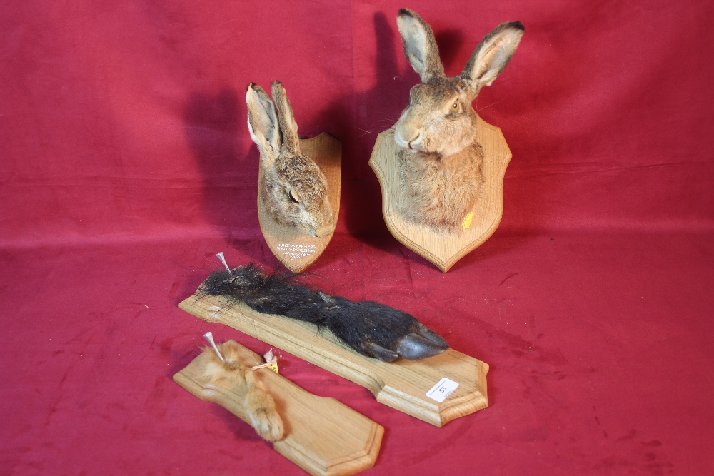 Lot 53 - A quantity of hunting trophies