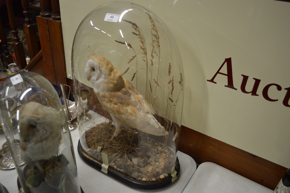 Lot 49 - An early 20th Century taxidermy barn owl in glass